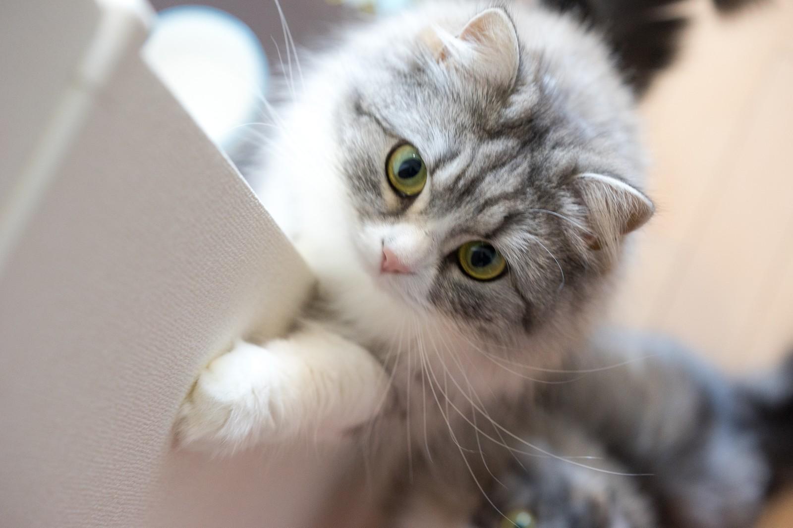 猫が爪切りを嫌がる時の対策!5つのポイントと2つのNGとは?