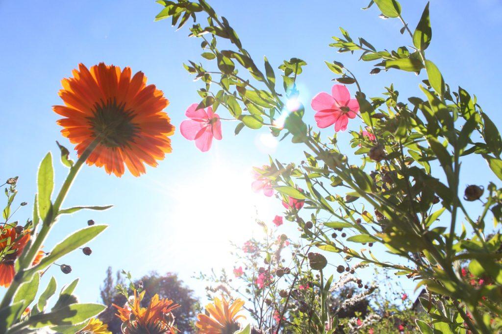 flowers-980162_1280