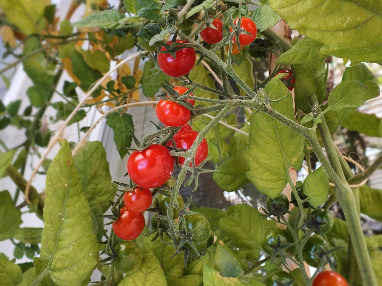 食べた果物や野菜の種を使った3大活用法を大公開