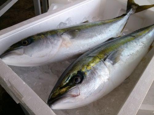 フルーツの匂いがする魚の種類を紹介!生臭さがありません!