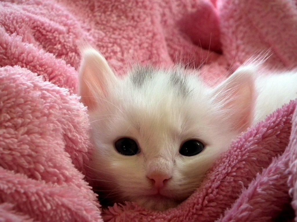 kitten-227009_1280 (1)