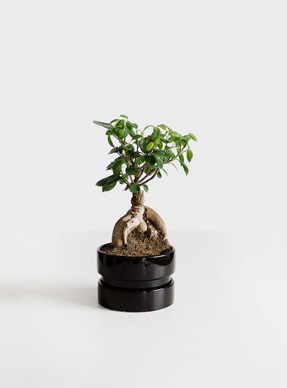 bonsai-1484854_960_720