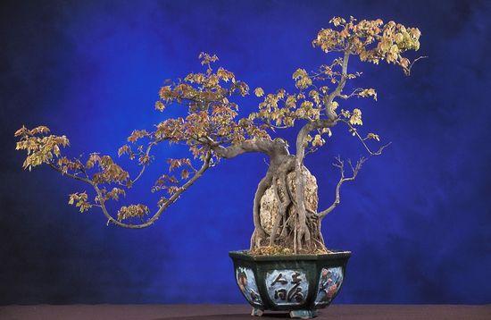 bonsai-62862_960_720