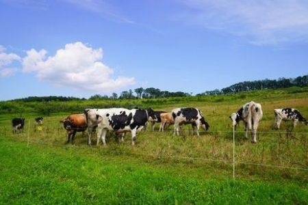 北海道で酪農を仕事に暮らす!就農への3つの道を専門家が教えます!